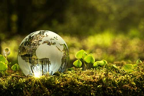 glass globe in a forest resting on the ground surrounded by moss