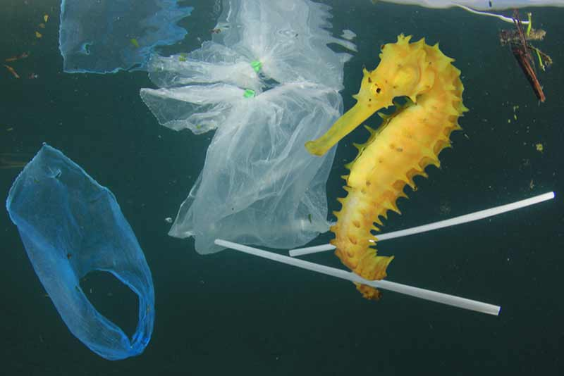 yellow sea horse surrounded by plastic bags and plastic waste